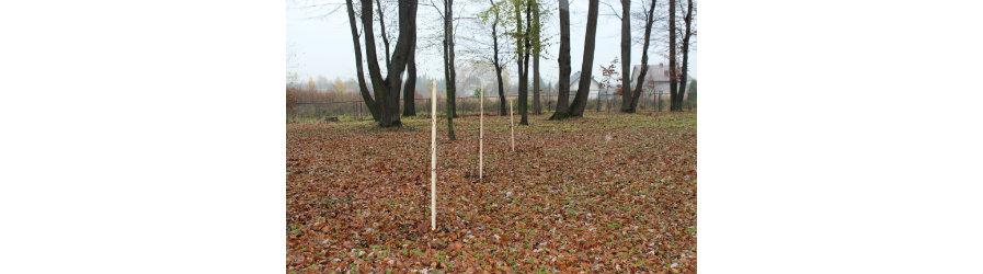 Akcja sadzenia drzew miododajnych w powiecie